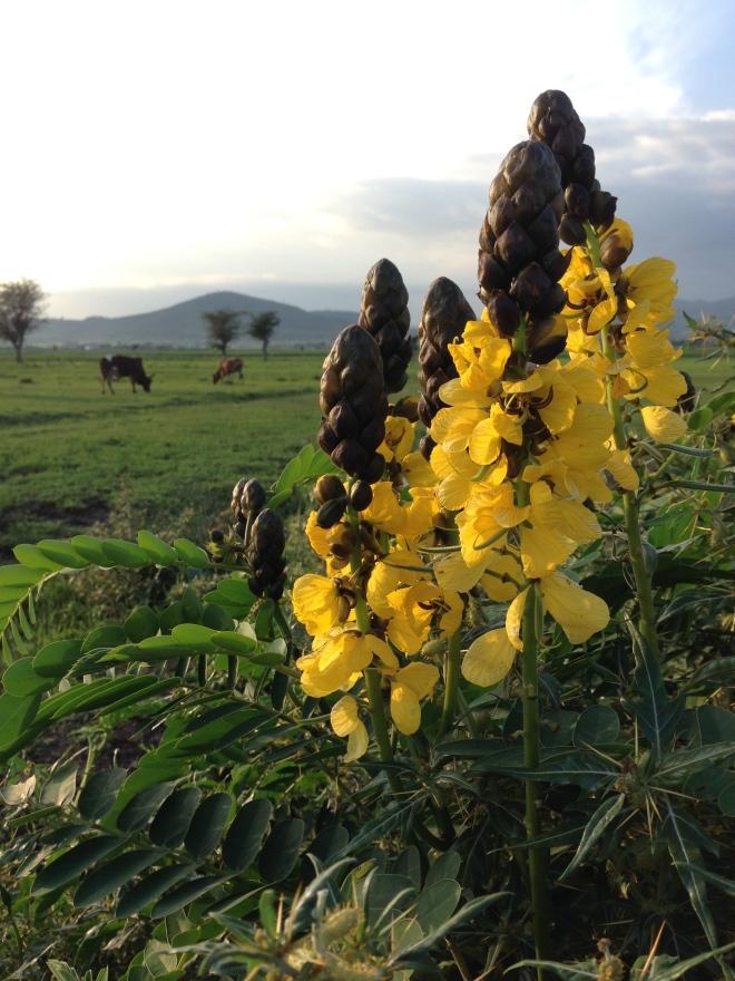 Ethiopia is beautiful!
