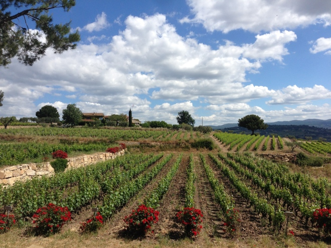 Bandol wine region of Provence.